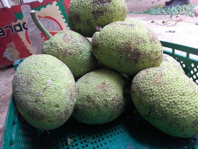 Fresh Breadfruit