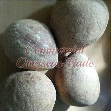 Dried Coconut Copra 02