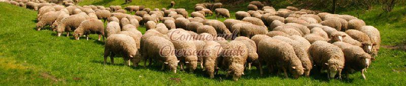 Sheep Hides
