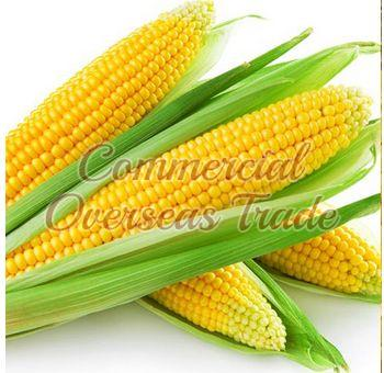 Yellow Maize 03
