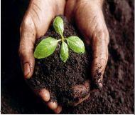 Somplus Agromine Organic Fertilizer 03