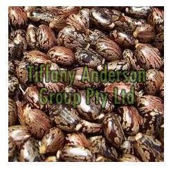 Castor Seeds 01