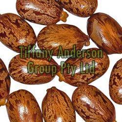 Castor Seeds 02