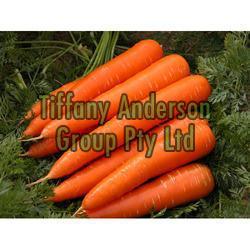 Fresh Carrot 01