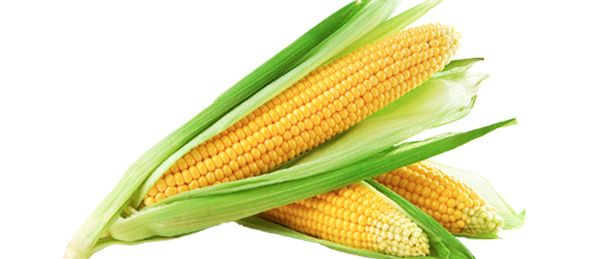 Yellow Corn 01