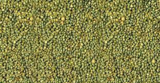 Green Millet Seeds 01