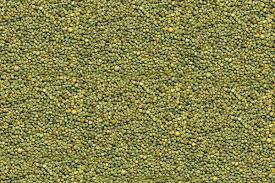 Green Millet Seeds 02