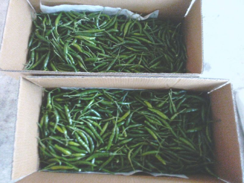 Fresh Green Chilli 05