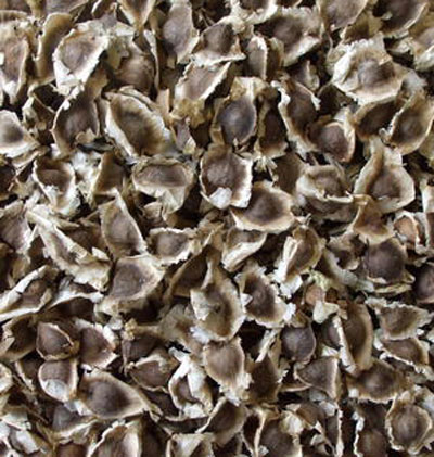 Dried Moringa Seeds