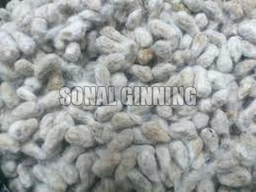 Cotton Seeds 01