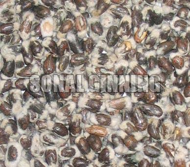 Cotton Seeds 04