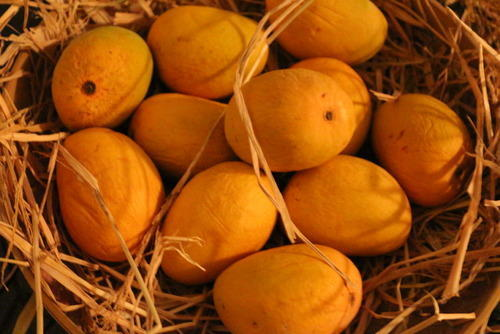Fresh Alphonso Mango 03