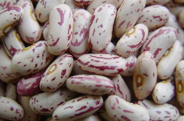 Light Speckled Kidney Beans