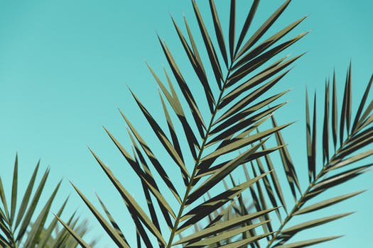 Palm Leaves 02