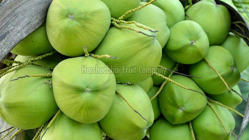 Fresh Tender Coconut Exporter,Wholesale Fresh Tender Coconut