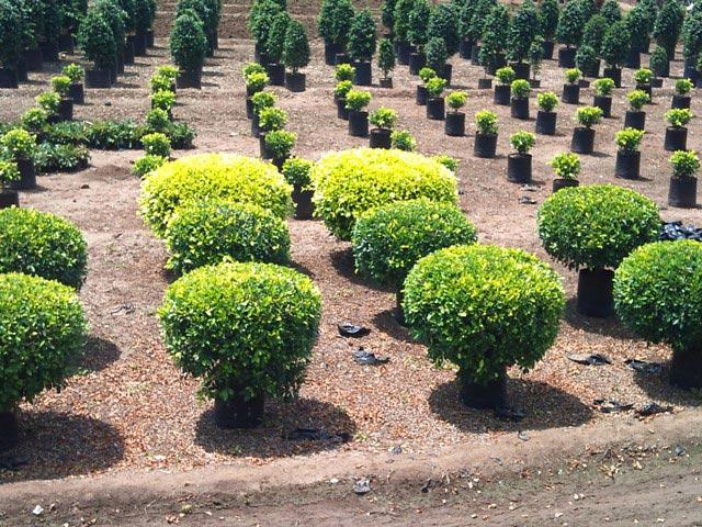 Gardening Plants Suppliers