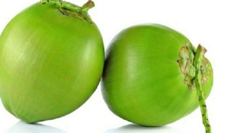 Wholesale Tender Coconut Supplier,Tender Coconut Distributor