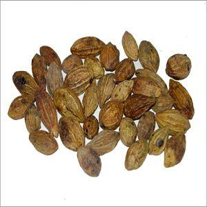Terminalla Chebula Seeds