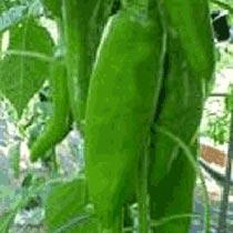 Anaheim Pepper Seeds