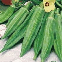 Clemson Spineless Okra Seeds