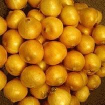 Grano 502 (Texas Early) Onion Seeds