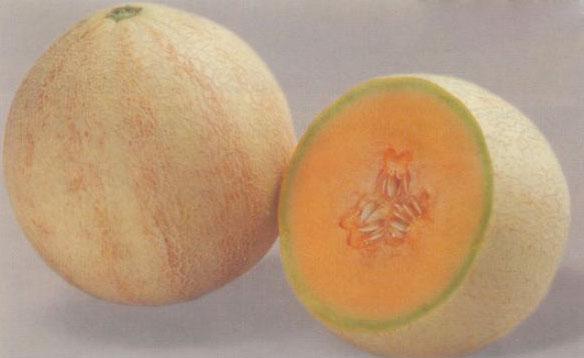 Muskmelon Seeds (Khushbu)