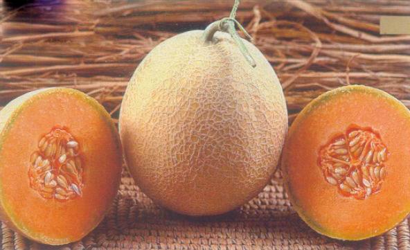 Muskmelon Seeds (Rustam)