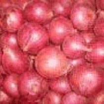 Poona Red Onion Seeds