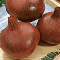 Red Creole Onion Seeds