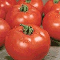 Strain B Tomato Seeds