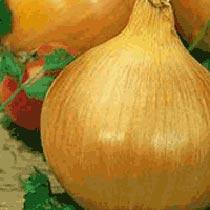 Texas (Early) Grano 502 PRR Onion Seeds