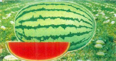 Watermelon Seeds (BSS-2000)