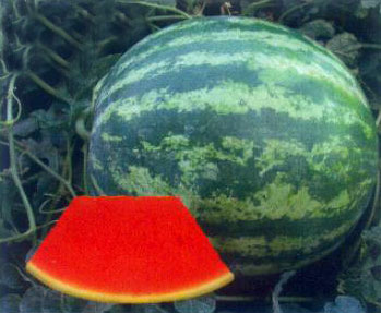 Watermelon Seeds (Seedless Victor)