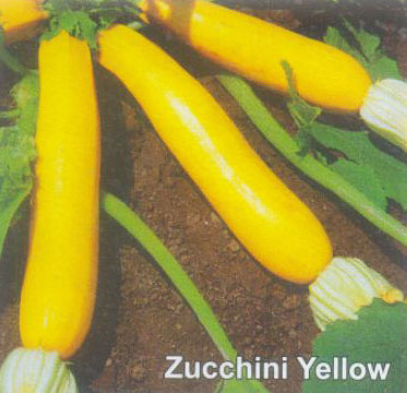 Zucchini Yellow Seeds