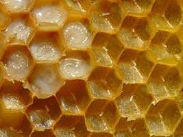 Bee Wax 02