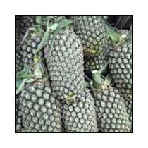 Pineapple Variety