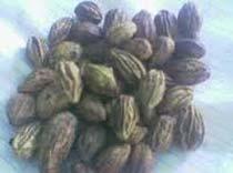 Harad Seeds