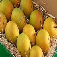 Alphonso Mango 01
