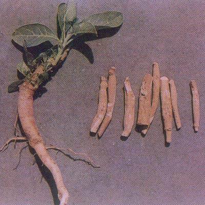 Ashwagandha Extract Supplier