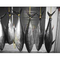 Fish 005