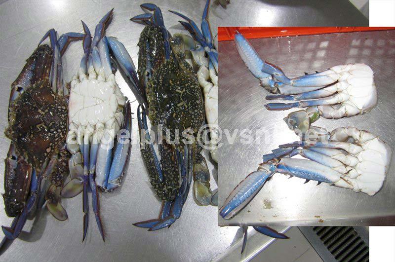 Frozen Portunus Pelagicus Crustaceans