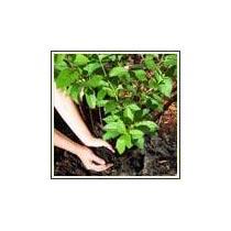 Organic Fertilizer