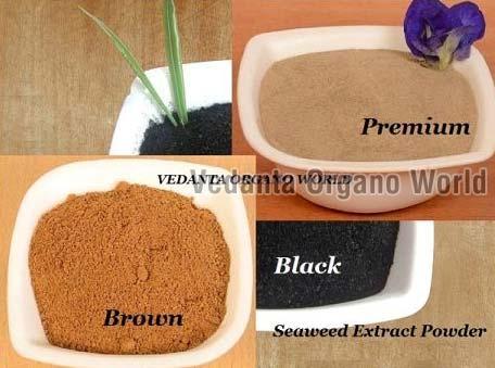 Seaweed Extract Powder  01