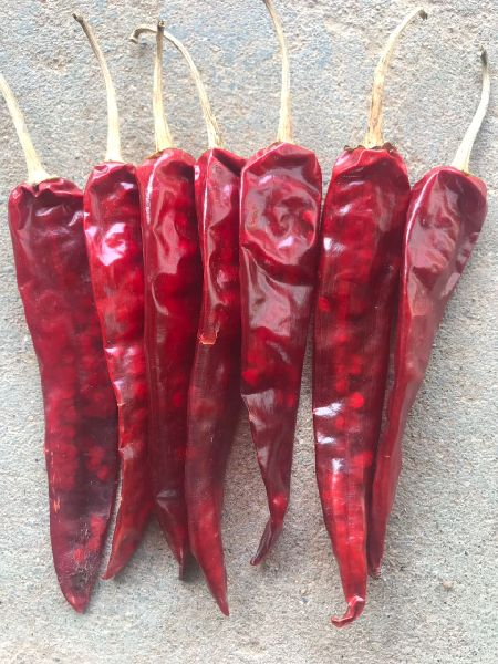 Dried Red Chilli 02