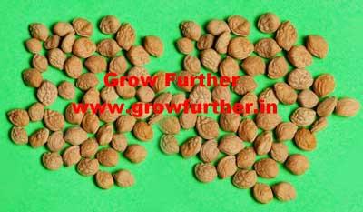 Sarpgandha Seeds