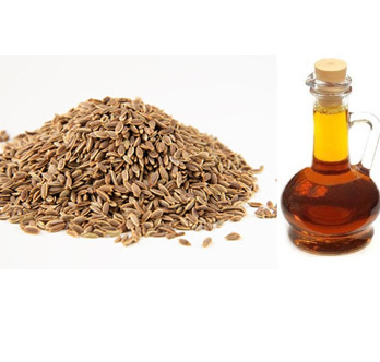 Celery Seed Oleoresin Oil