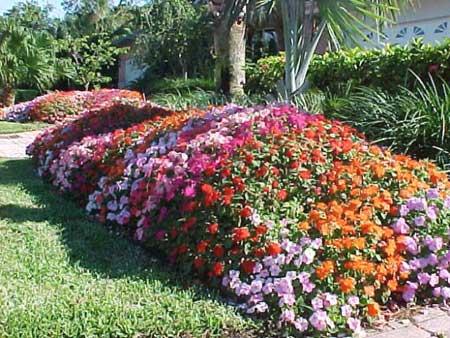Hedge Plants