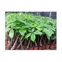 Indoor Plants 02