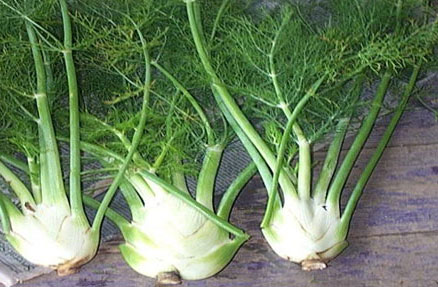 Fennel Roots