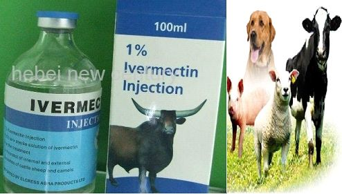 Veterinary Injection 01